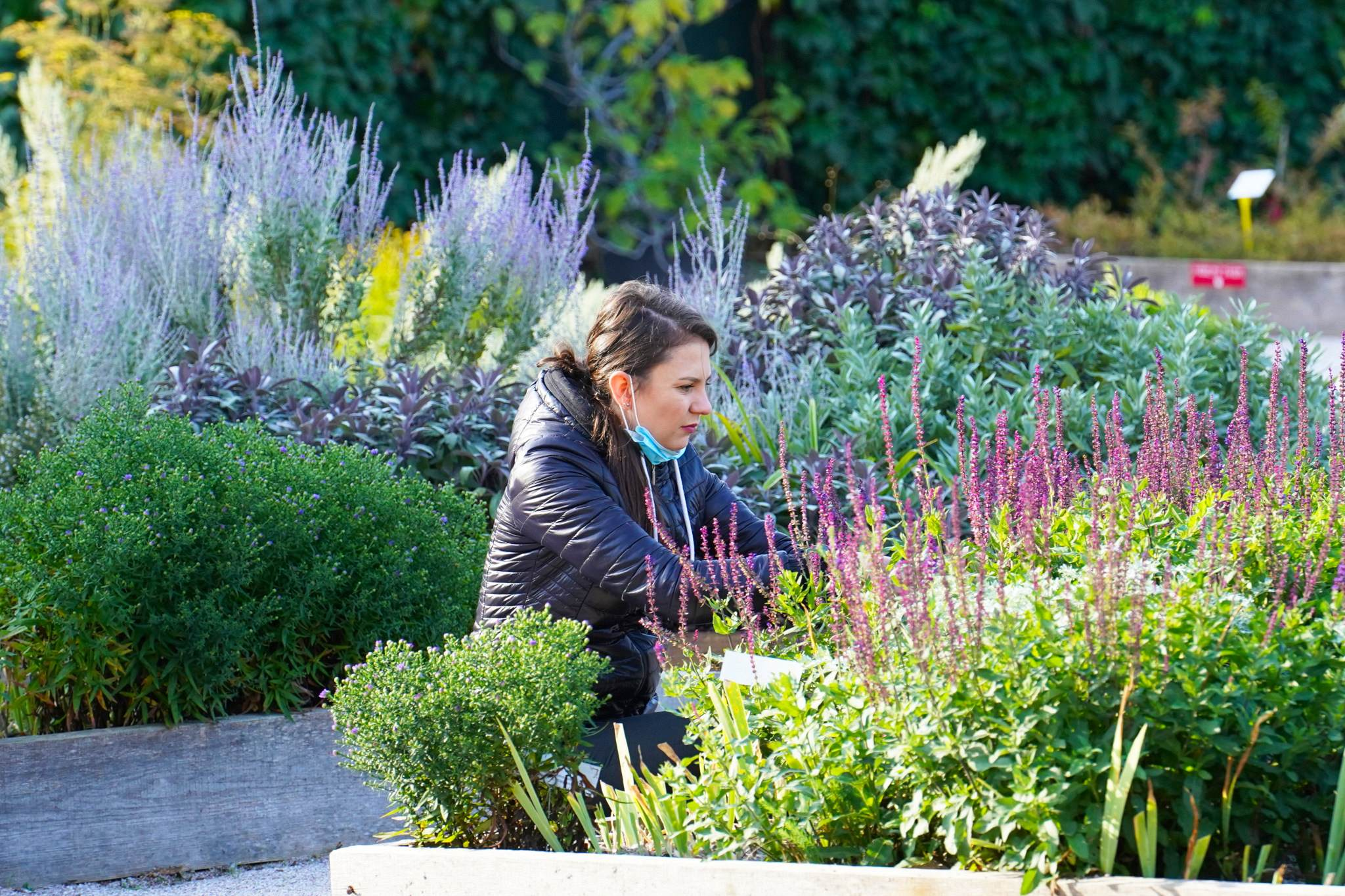V bylinkové zahradě v Žirči si můžete zakoupit sadbu zeleniny a bylinek